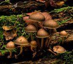 грибы в кишечнике